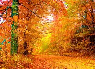 Осенняя диета фото